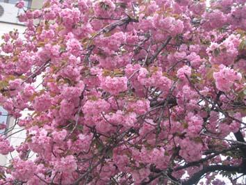 SpringBlog.jpg