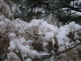 SnowBlog.jpg