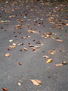 acornsSmall.jpg